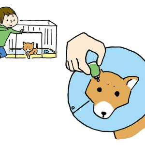 はじめての柴犬との暮らし方(辰巳出版)