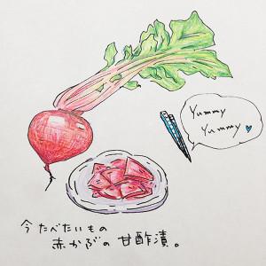 オリジナルイラスト 赤かぶの甘酢漬け